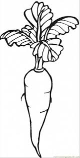 Small Picture Carrot 2 Coloring Page Free Vegetables Coloring Pages
