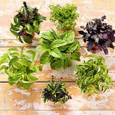 Herb Substitutes Better Homes Gardens