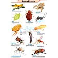 Beneficial Insects Chart Harmful Insects Chart India Harmful Insects Chart
