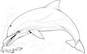 Free Printable Dolphin Coloring Pages At Getdrawingscom Free For