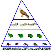 Реферат Сообщество экосистема биогеоценоз com Банк  Сообщество экосистема биогеоценоз