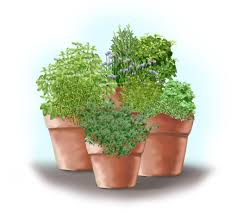 front view of herb garden in containers