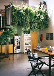 Indoor Climbing Plants  Climbing Plants  Climbing Plant SupportClimbing Plants Indoor