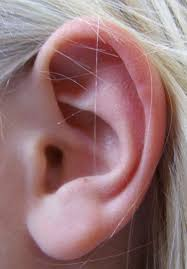 Видеоурок Ухо не только орган слуха Ухо орган равновесия по  Часто