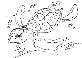 Small Picture Coloring page sea turtle img 27229