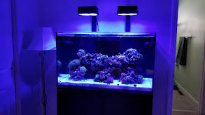 Prime Hd Light Ai Prime Hd Light Shade Reef2reef Saltwater And Reef