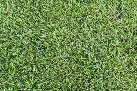 artificial turf texture. Green Grass Artificial Turf Texture R