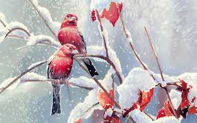 wallpapers of the day love birds 1024x640 px love birds pics