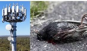 5G conspiracy: UFO hunter shares fake news 5G towers 'killing millions of  birds' | Weird | News | Express.co.uk