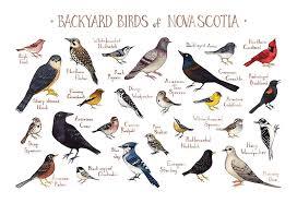Amazon Com Backyard Birds Of Nova Scotia Canada Field