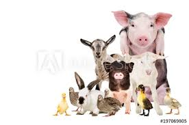 farm animals together. Unique Animals Group Of Cute Farm Animals Together Isolated On White Background Inside Farm Animals Together D