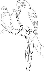 Small Picture Parrot coloring page Parrot free printable coloring pages animals