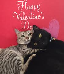 Image result for happy valentine day cat