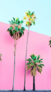 Palm tree wallpapers for iphone 5/5c/5s and ipod touch. Palm Tree Iphone Wallpaper Desktop Wallpaper Summer Pastel Pink Palm Tree 2009720 Hd Wallpaper Backgrounds Download