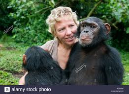 Debbie Cox Debbie Cox Of The Jane Goodall Institute Plays With Chimpanzees
