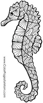 Coloring Seahorse Seahorse Coloring Seahorse Coloring Page Free