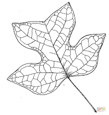 Small Picture Tulip Tree Leaf coloring page Free Printable Coloring Pages