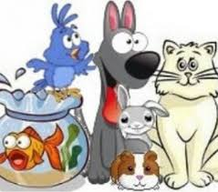 Garde d'animaux à domicile : Garde D Animaux A Votre Mon Domicile A Nimes Nimes 30000