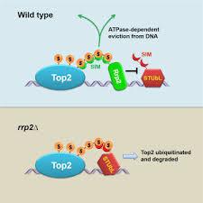 genome walking clontech matchmaker
