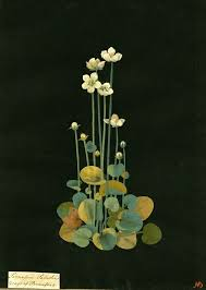 if you re fond of antique botanical images look up the work of mary delany this century englishwoman created delicate paper cut out works beautiful and