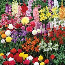 Small Picture Bulbs Gardening Idea Landscaping Gardening Ideas