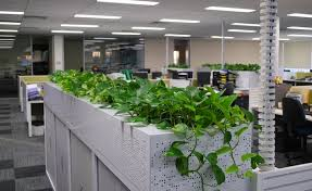 great office plants. Office Plants Great
