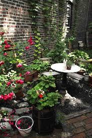 garden life in greenpoint brooklyn