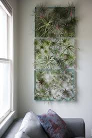 12 Elegant Ways To Bring Air Plants Into Your Home Air Plants