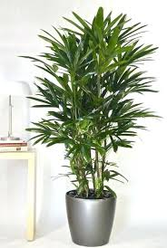 office pot plants. Office Plant Ideas Best Tall Indoor Plants On Easy House Within Remodel Pot .