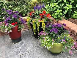 pretty potted plants and flowers perk