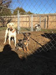 Catahoula Growth Chart Catahoula Pup Growth Questions