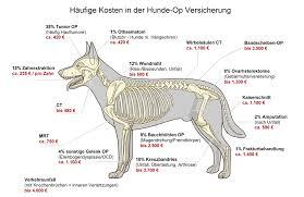 Bandscheibenvorfall hund