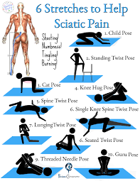 Image result for free pics of sciatic nerve