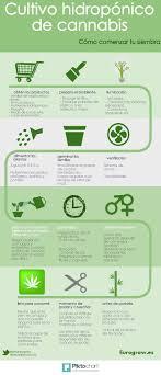 La planta conocida como Cannabis Sativa es muy fcil de cultivar en casa  siempre que sepas