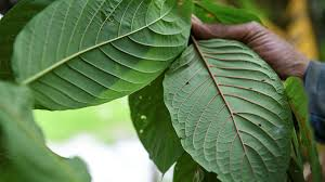 Top 4 Best Kratom Vendors Reviewed - My Marijuana Blog
