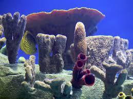 Aquarium Backgrounds Printable Picture Aquarium
