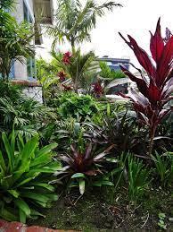 tropical landscaping tropical garden
