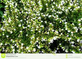 garden small white flowers in the stock photo image of lot beautiful tiny nature background macro