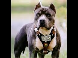 بهترین سگهای دنیا