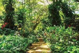 find three of the world s best tropical gardens on the island of kauai