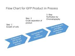 Protein Purification Chart Purification Of Green Fluorescent Protein Ppt Download