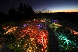 Mn Light Show This Is No Holiday Display Arboretum Hosts Colorful Winter