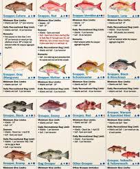 19 Florida Keys Environmental Regulations You Should Know