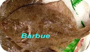 """Résultat de recherche d'images pour """"la barbue poisson"""""""