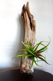 wooden plant air plant display idea