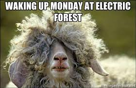 Waking up Monday at electric Forest - Hungover Goat | Meme Generator via Relatably.com
