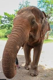 photo essay beautiful paris photo essay non stop and paris photo essay elephants at the elephant nature park non stop destination