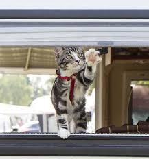 Dritter Ausflug Mit Den Womokatzen Reisen Aus Leidenschaft
