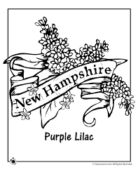 Small Picture State Flower Coloring Pages New Hampshire State Flower Coloring
