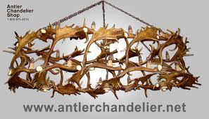 real antler custom fallow whitetail deer chandelier cfwt